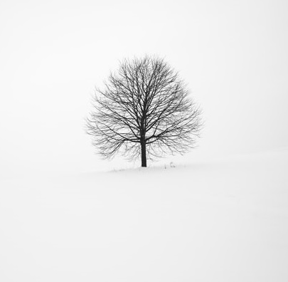 Naked tree in snow