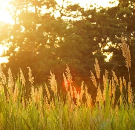 Sun in long grass
